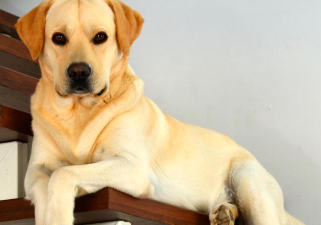 STJ Decide Que Condomínio Não Pode Proibir Animal